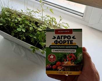 Агрофорте удобрение на фоне рассады